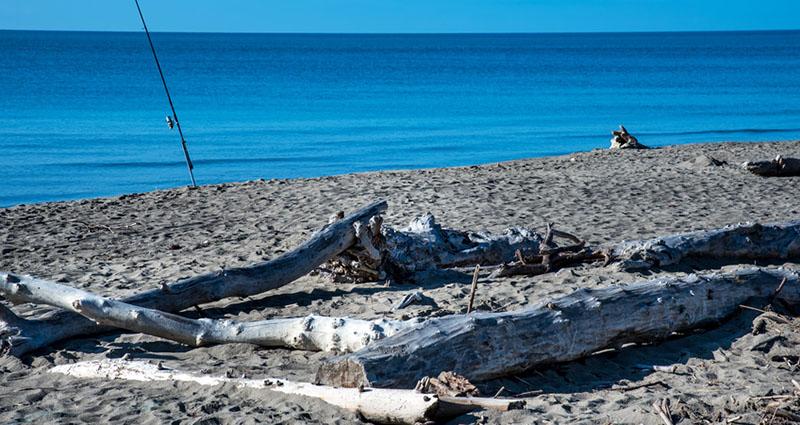 Marina di Alberese: la spiaggia dei tronchi